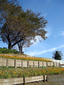 画像2011 027.jpg